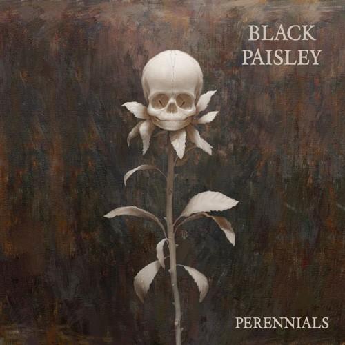 Black Paisley - Perennials